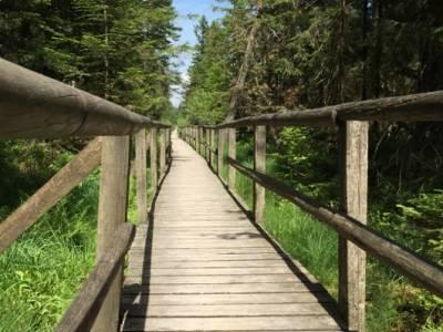 Wildseemoor Kaltenbronn